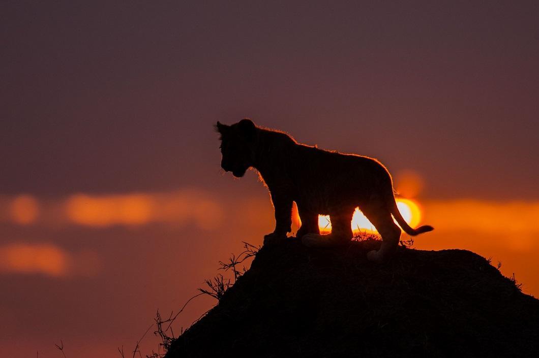 http://bigpicture.ru/wp-content/uploads/2014/06/afrikanskie-zakaty-2.jpg