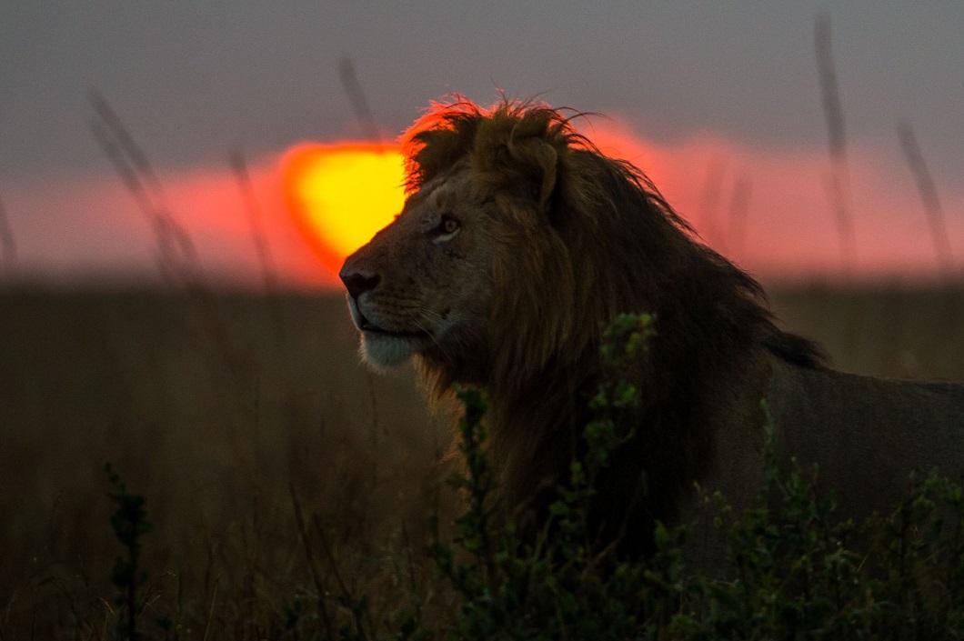http://bigpicture.ru/wp-content/uploads/2014/06/afrikanskie-zakaty-3.jpg