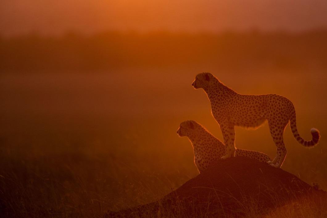 http://bigpicture.ru/wp-content/uploads/2014/06/afrikanskie-zakaty-4.jpg