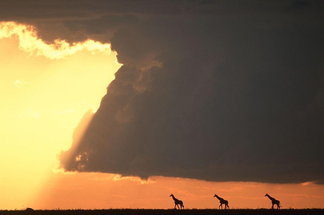 http://bigpicture.ru/wp-content/uploads/2014/06/afrikanskie-zakaty-5.jpg