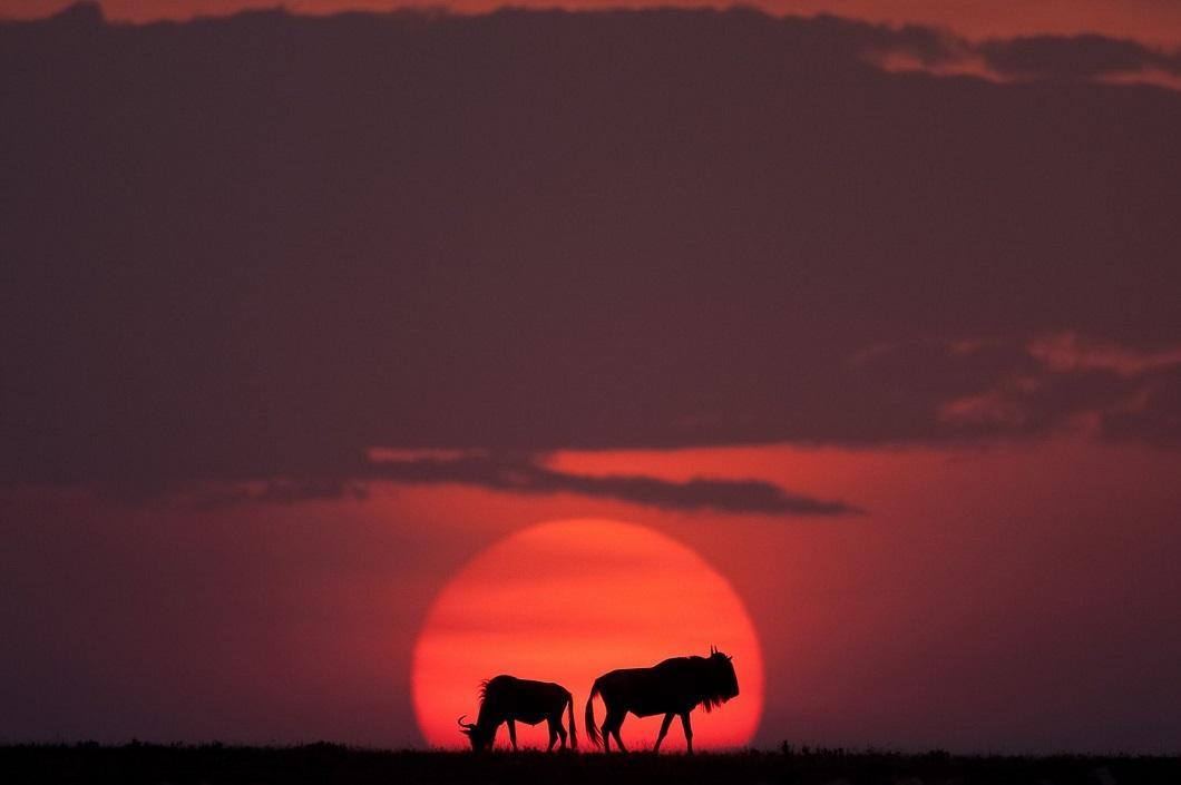 http://bigpicture.ru/wp-content/uploads/2014/06/afrikanskie-zakaty-6.jpg