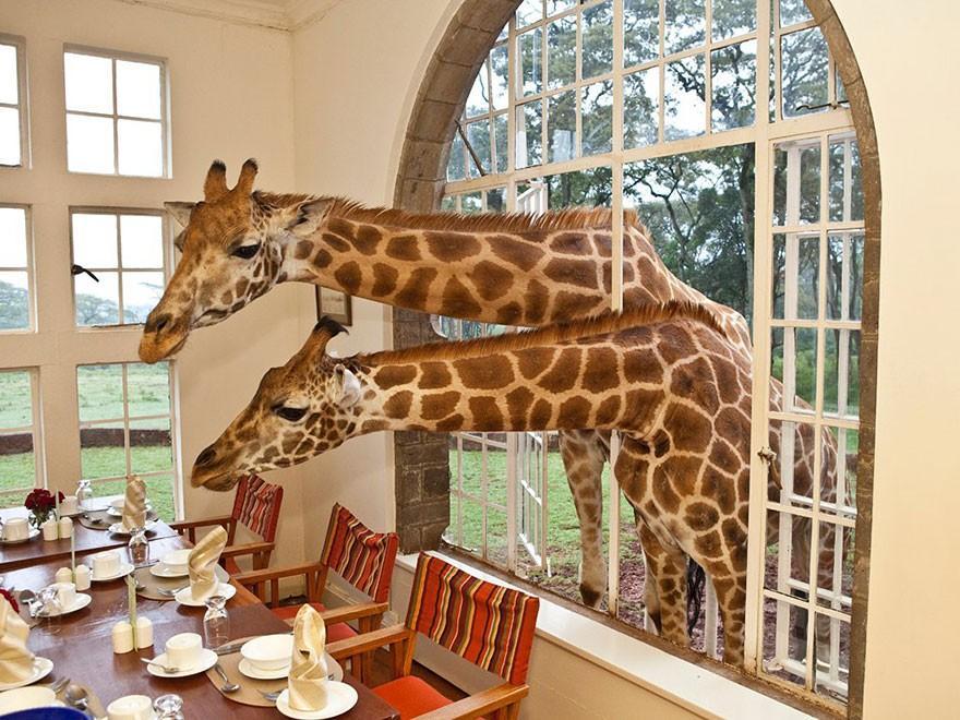 Стръмни amazinghotels44 хотели, които искат да бъдат точно сега