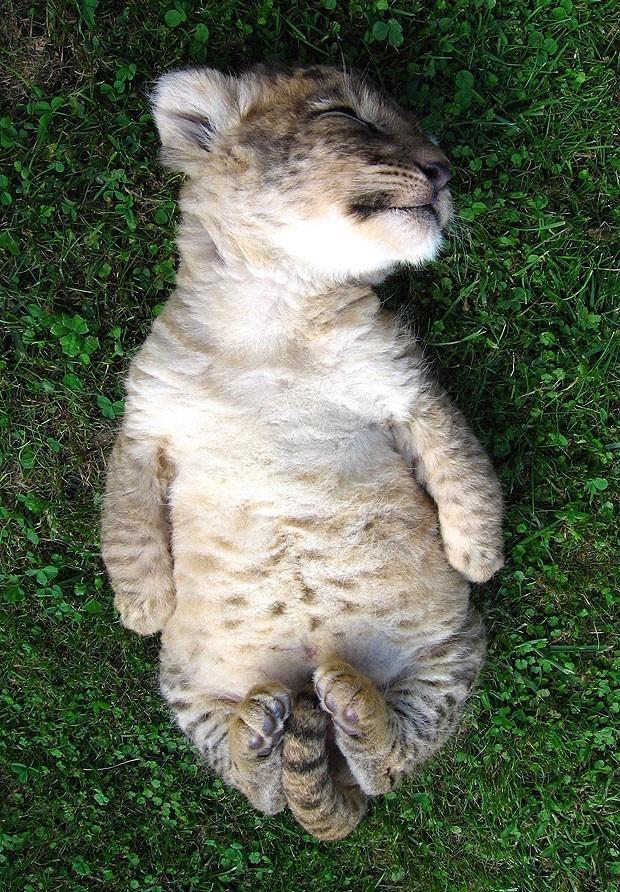 catstuff14 Большие кошки, которые просто хотят заниматься обычными кошачьими делами