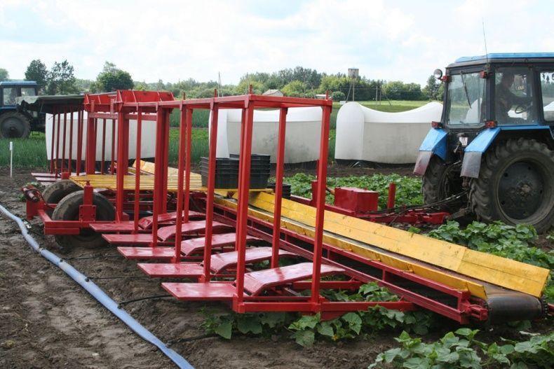 cucumbersharvest01 Сбор урожая огурцов по белорусски