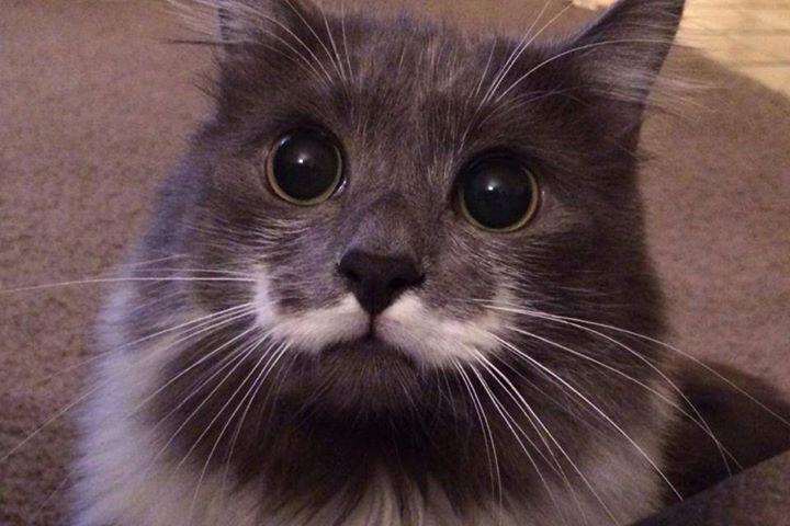 famousanimals02 Топ 10 самых популярных животных в Instagram