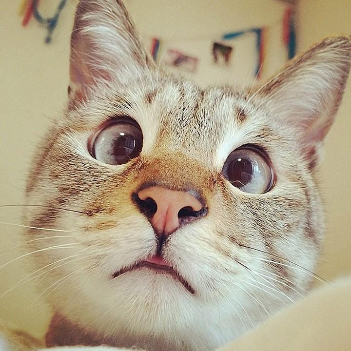famousanimals07 Топ 10 самых популярных животных в Instagram