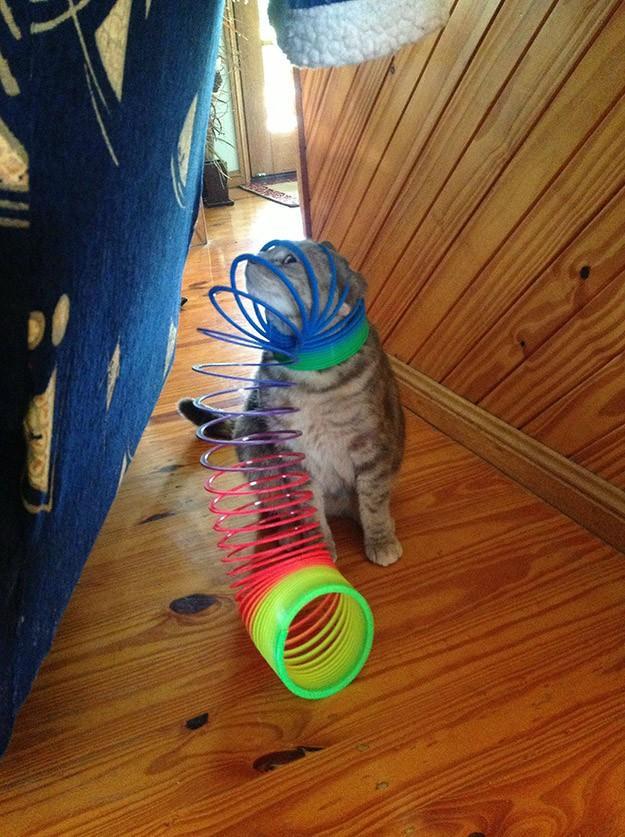 lolcats02 100 лучших фотографий кошек всех времен и народов