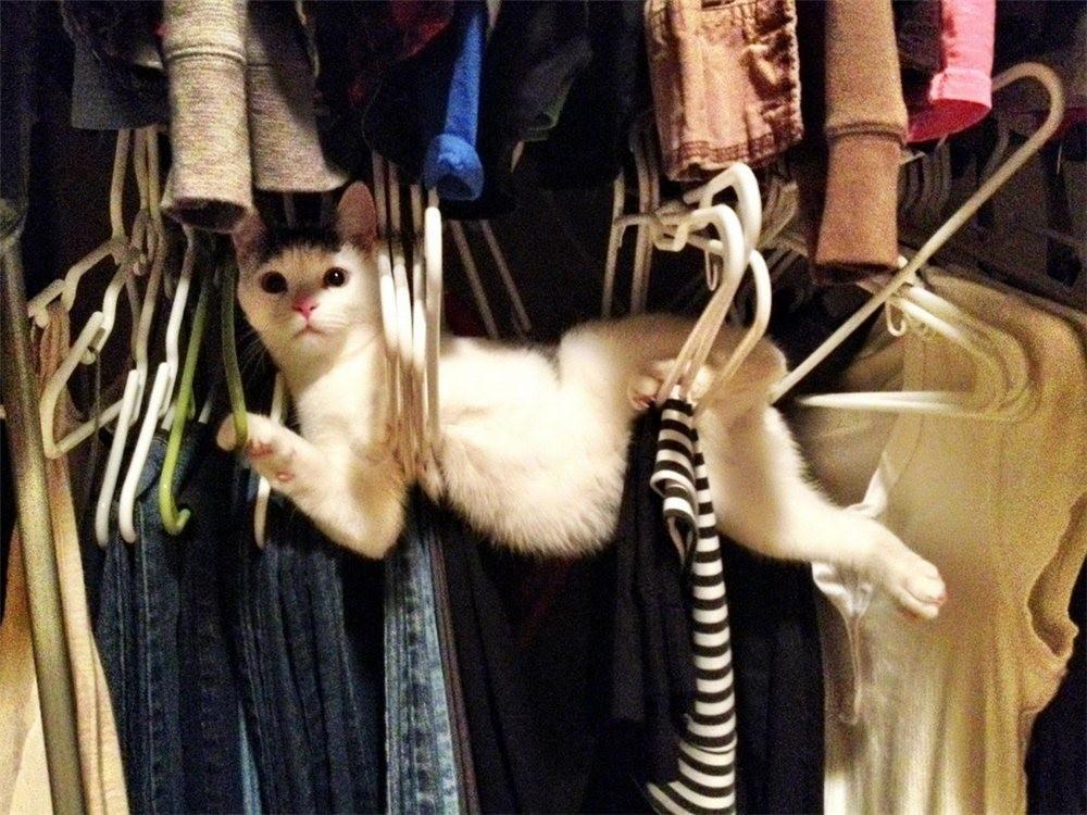 lolcats03 100 лучших фотографий кошек всех времен и народов