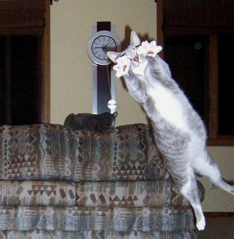 lolcats07 100 лучших фотографий кошек всех времен и народов
