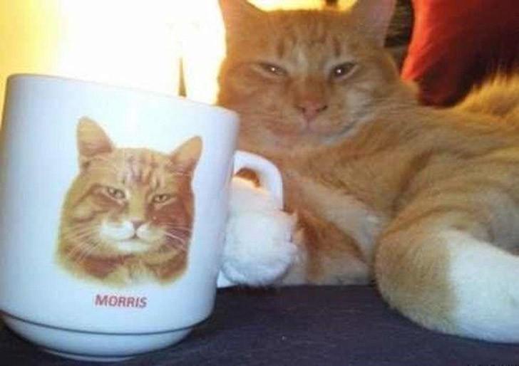 lolcats11 100 лучших фотографий кошек всех времен и народов