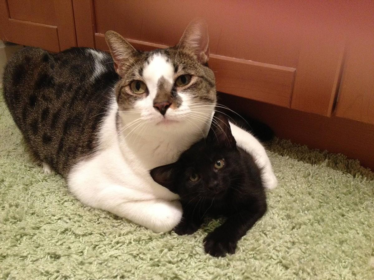 lolcats13 100 лучших фотографий кошек всех времен и народов