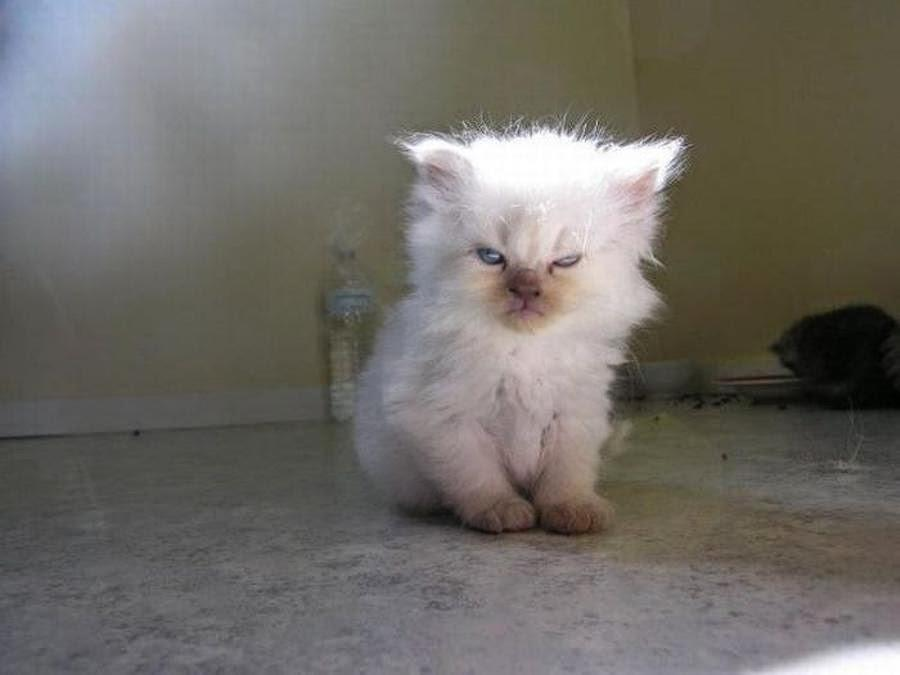 lolcats14 100 лучших фотографий кошек всех времен и народов