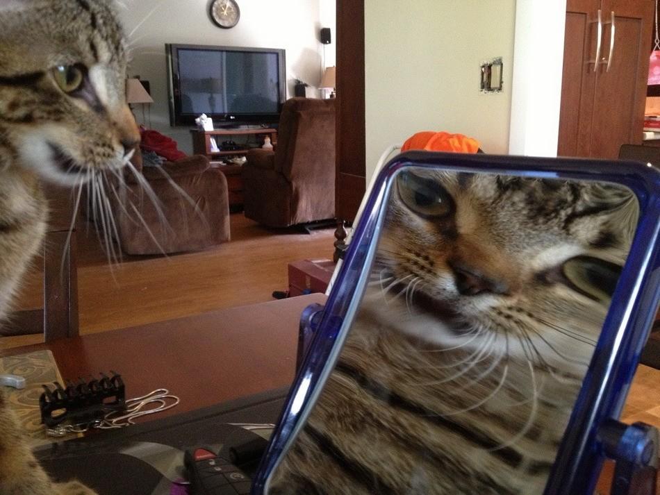 lolcats16 100 лучших фотографий кошек всех времен и народов