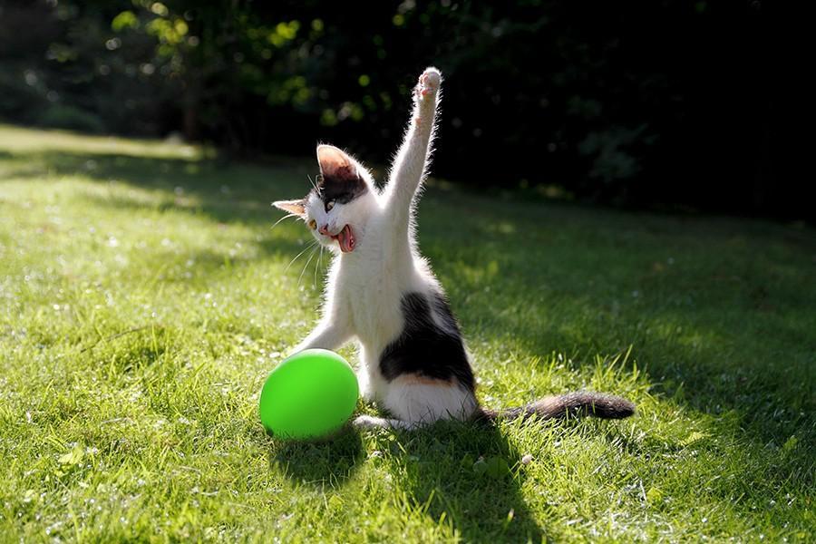 lolcats20 100 лучших фотографий кошек всех времен и народов