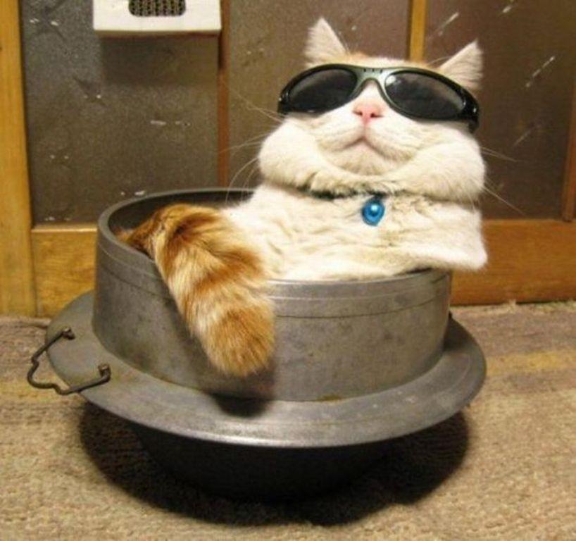 lolcats21 100 лучших фотографий кошек всех времен и народов