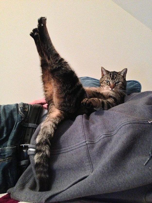 lolcats24 100 лучших фотографий кошек всех времен и народов