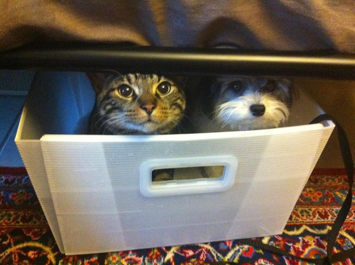 lolcats29 100 лучших фотографий кошек всех времен и народов