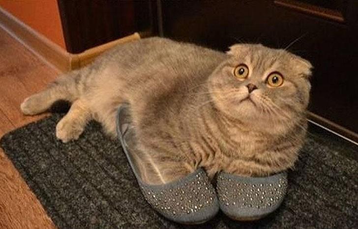 lolcats32 100 лучших фотографий кошек всех времен и народов