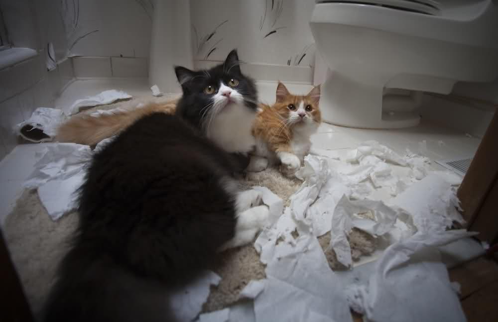 lolcats34 100 лучших фотографий кошек всех времен и народов