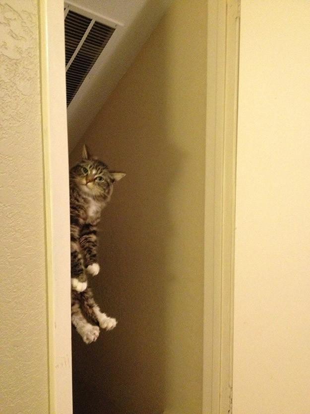 lolcats35 100 лучших фотографий кошек всех времен и народов