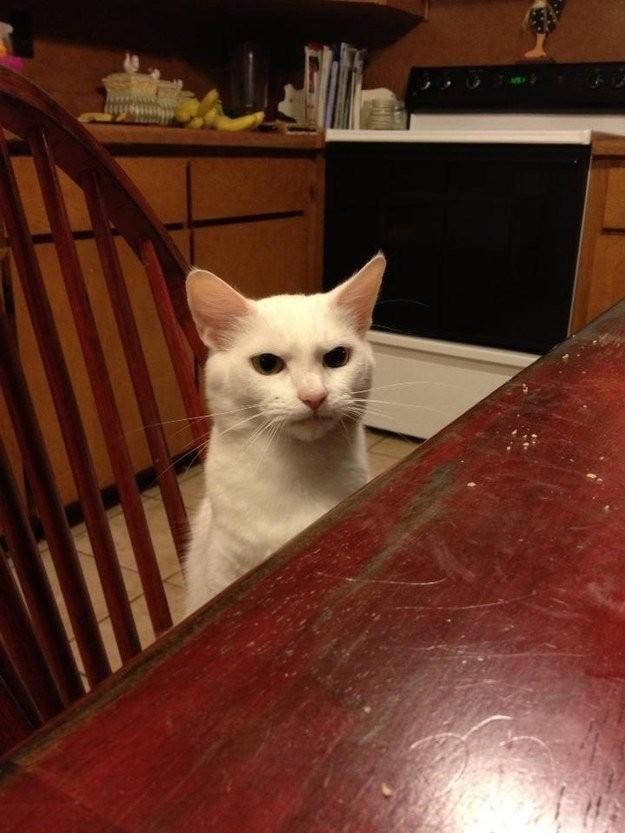 lolcats37 100 лучших фотографий кошек всех времен и народов