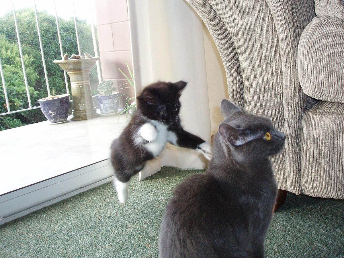 lolcats40 100 лучших фотографий кошек всех времен и народов