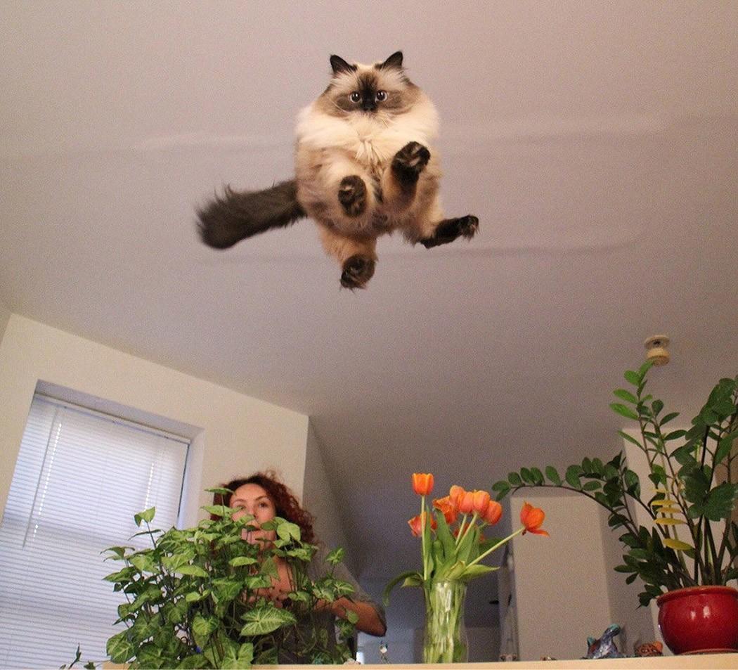 lolcats41 100 лучших фотографий кошек всех времен и народов