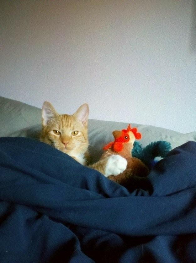 lolcats46 100 лучших фотографий кошек всех времен и народов