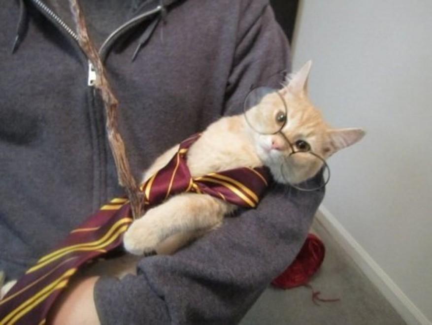 lolcats57 100 лучших фотографий кошек всех времен и народов