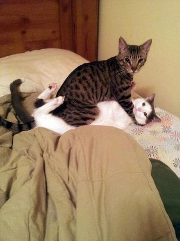 lolcats59 100 лучших фотографий кошек всех времен и народов