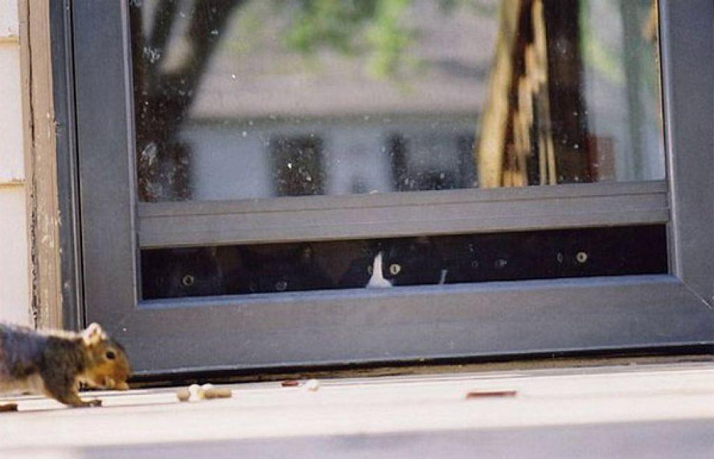 lolcats62 100 лучших фотографий кошек всех времен и народов