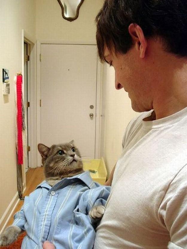 lolcats63 100 лучших фотографий кошек всех времен и народов