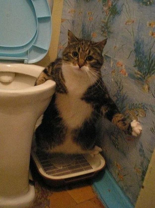 lolcats64 100 лучших фотографий кошек всех времен и народов