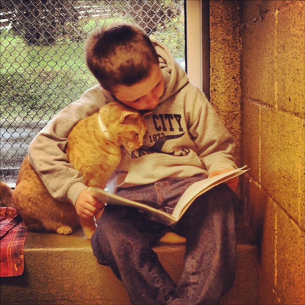 lolcats66 100 лучших фотографий кошек всех времен и народов