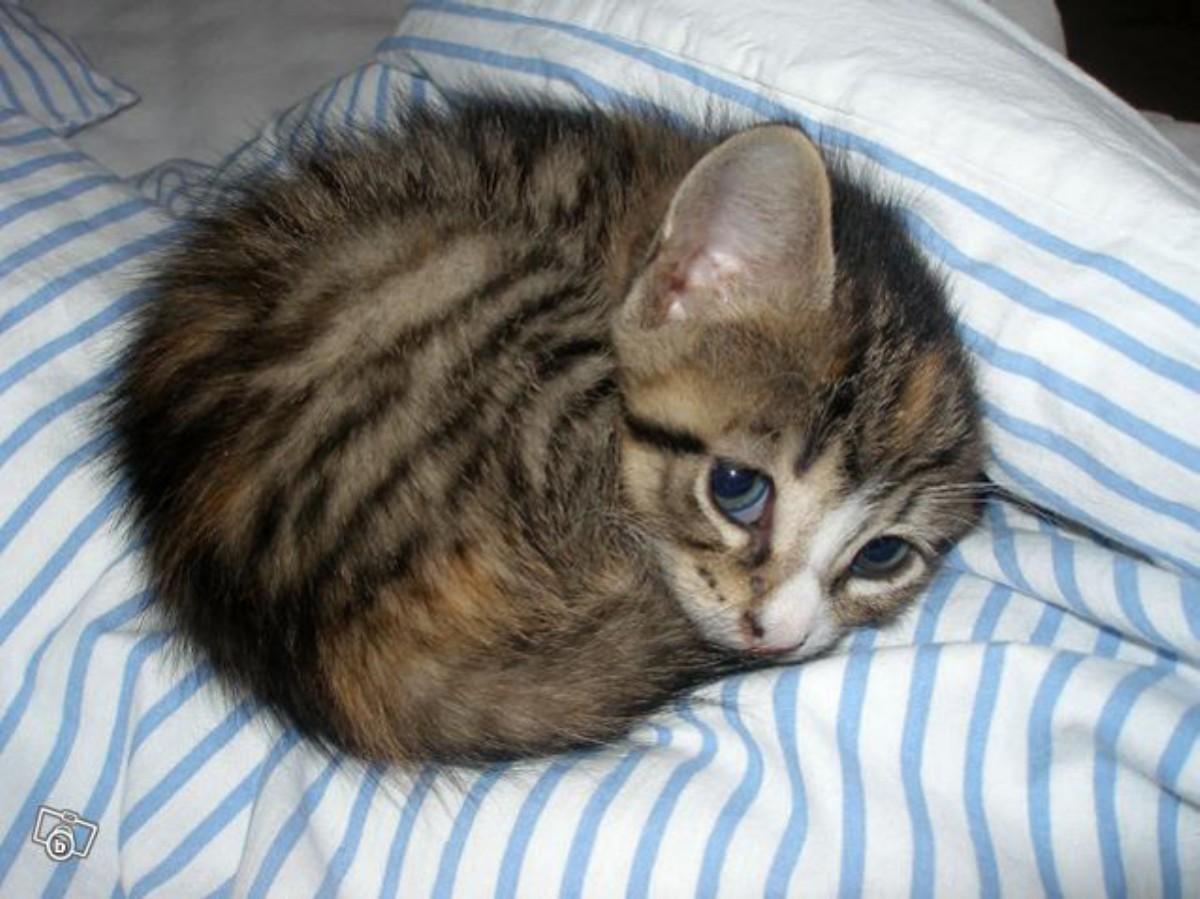котенок в милый мире фото самые