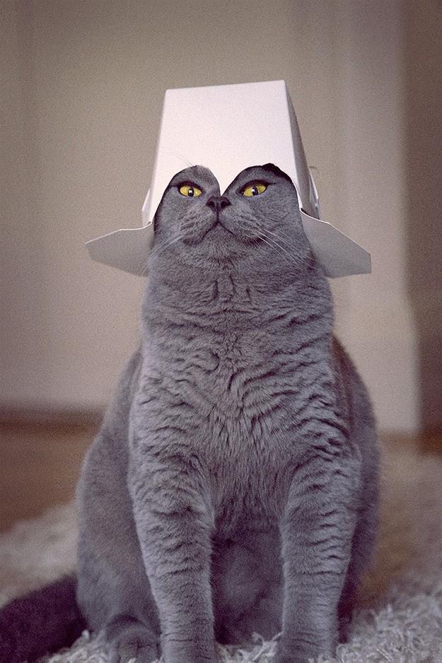 lolcats70 100 лучших фотографий кошек всех времен и народов