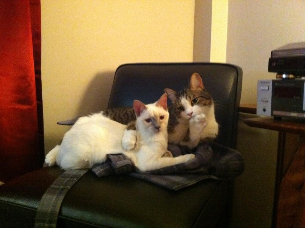 lolcats74 100 лучших фотографий кошек всех времен и народов