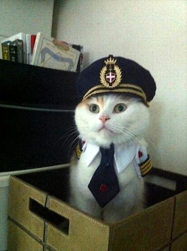 lolcats76 100 лучших фотографий кошек всех времен и народов