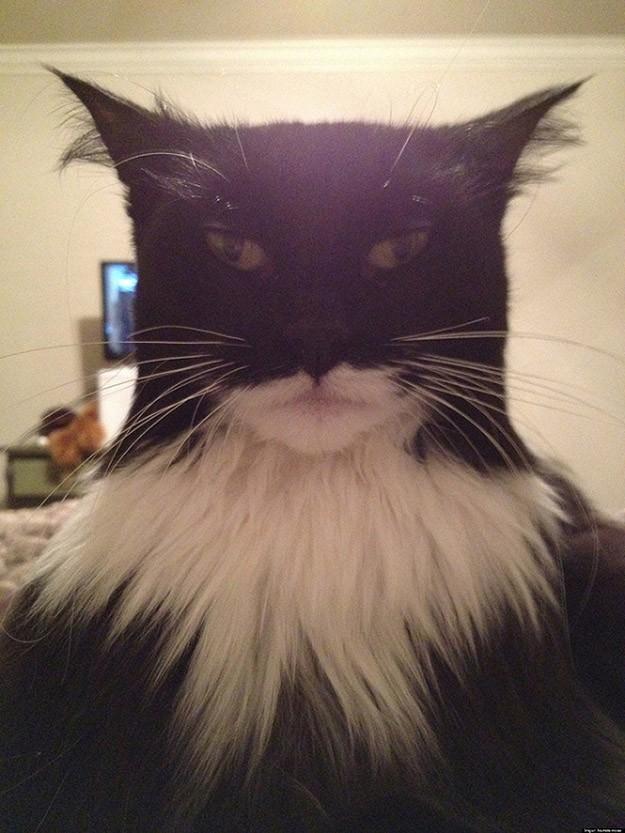 lolcats77 100 лучших фотографий кошек всех времен и народов