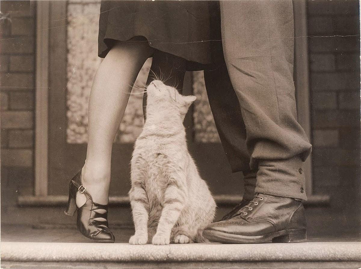 lolcats86 100 лучших фотографий кошек всех времен и народов