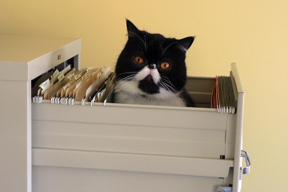 lolcats88 100 лучших фотографий кошек всех времен и народов