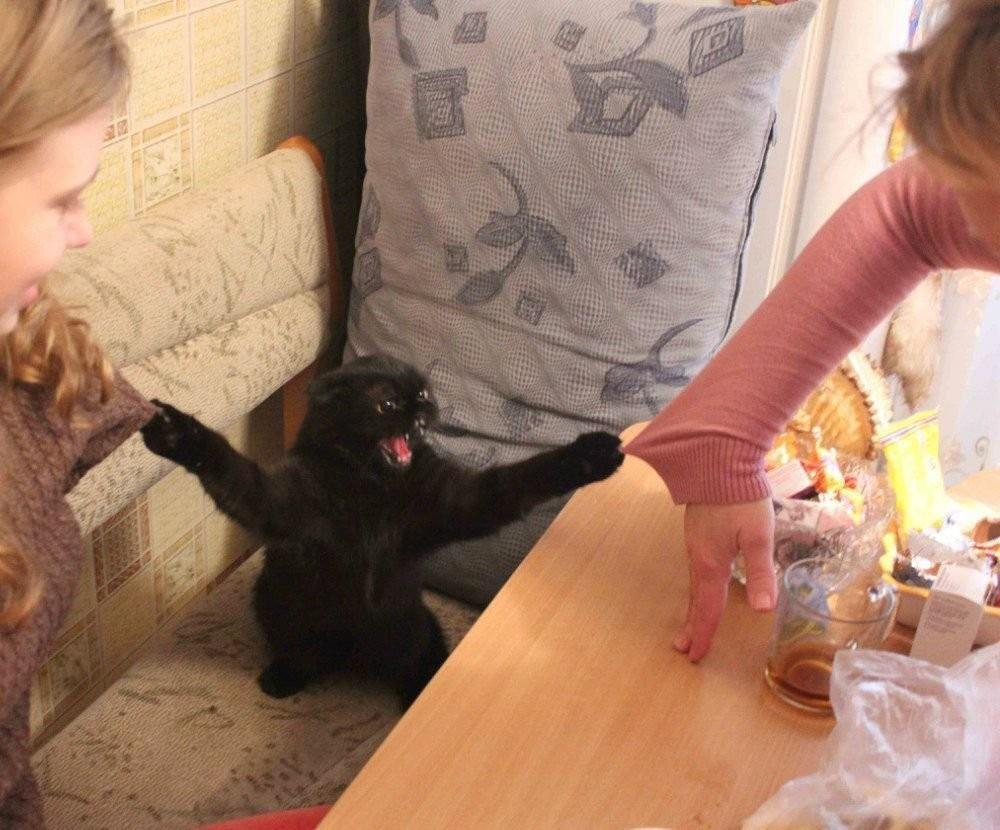 lolcats89 100 лучших фотографий кошек всех времен и народов