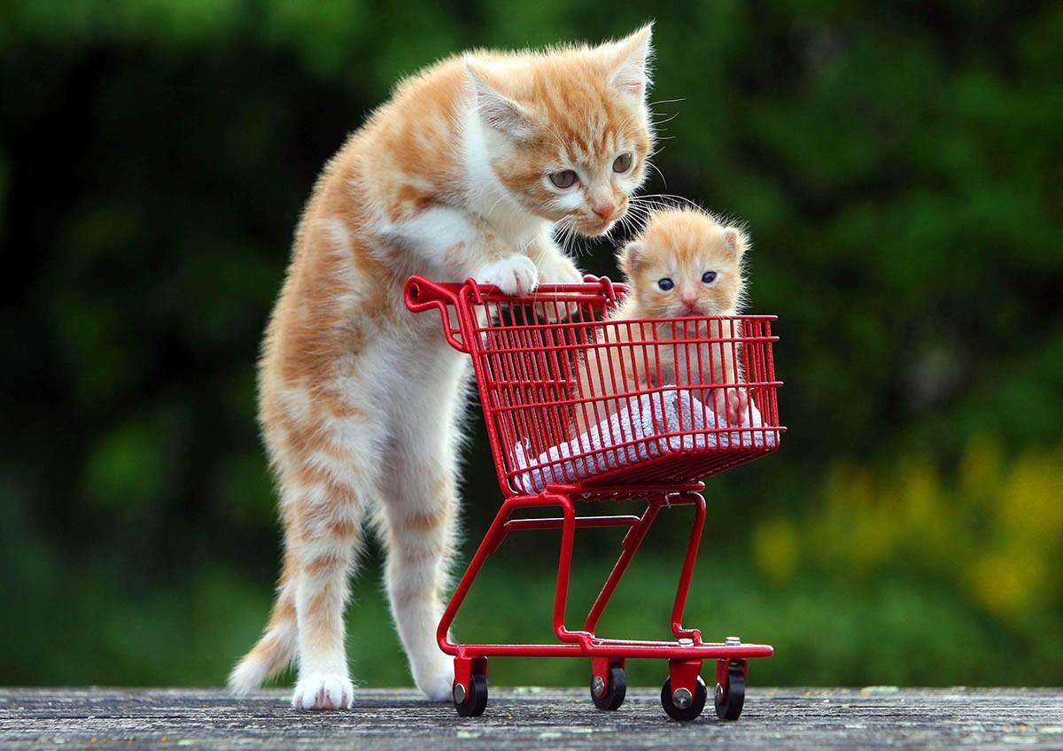 lolcats92 100 лучших фотографий кошек всех времен и народов