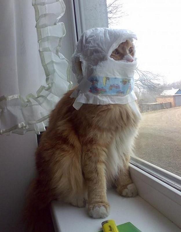 lolcats94 100 лучших фотографий кошек всех времен и народов