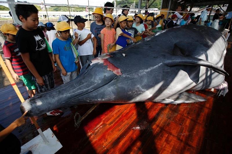 ТОП-10: Самые большие киты планеты ( + ФОТО ) | 532x800