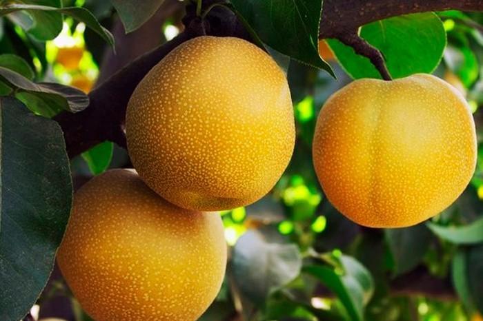 strangefruits05 Самые необычные фрукты и овощи на прилавках