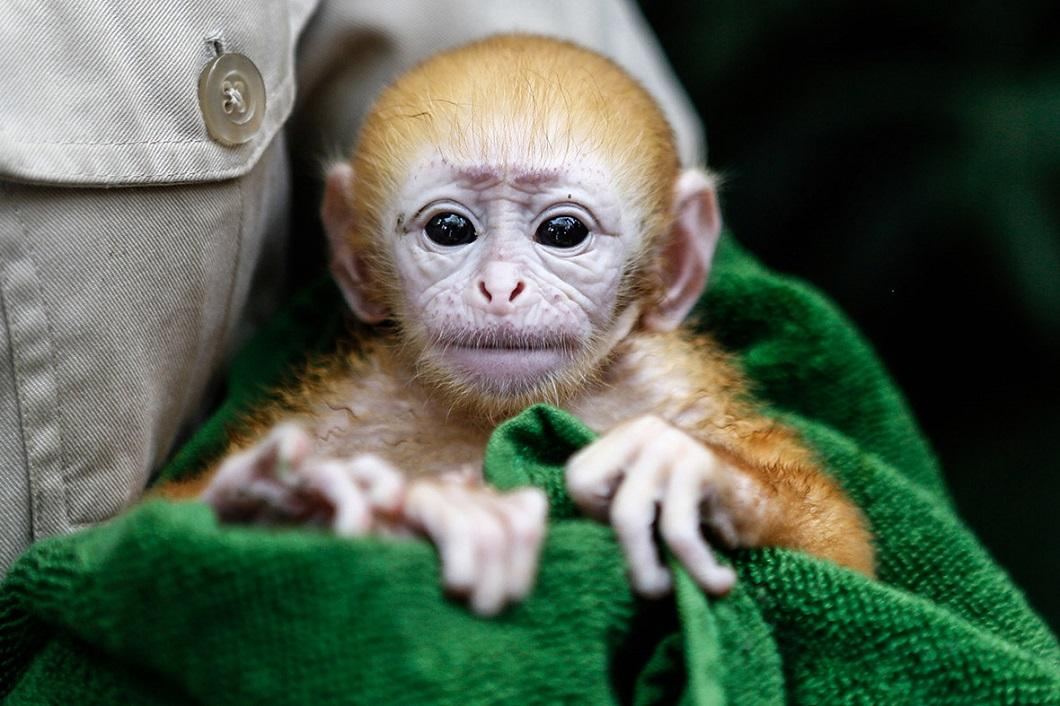 zhivotzaiyun 14 Лучшие фотографии животных со всего мира за неделю