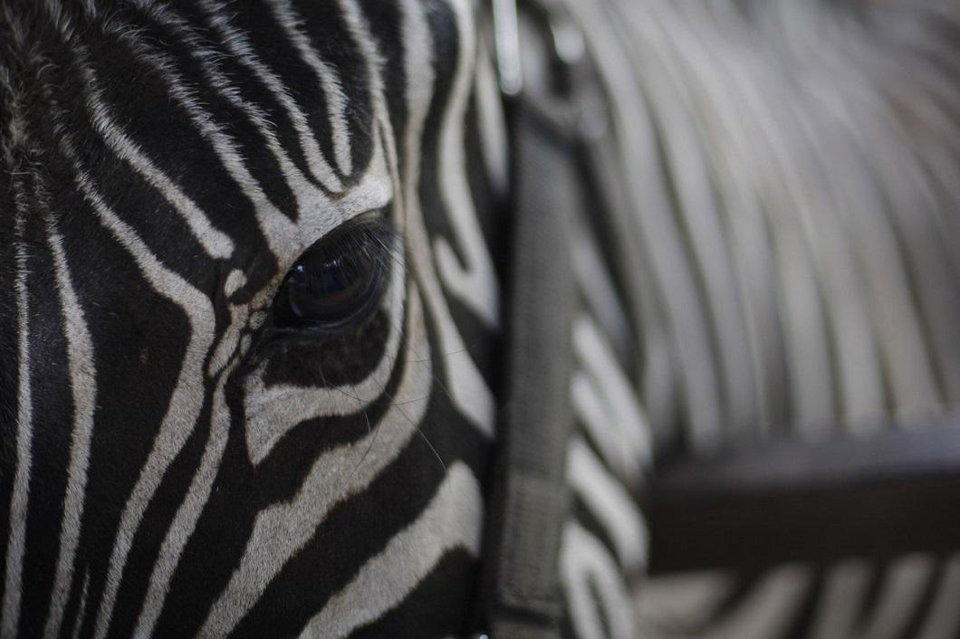 zhivotzaiyun 16 Лучшие фотографии животных со всего мира за неделю