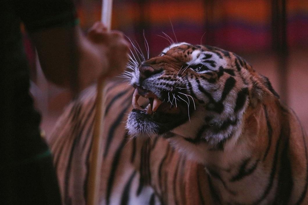 zhivotzaiyun 18 Лучшие фотографии животных со всего мира за неделю