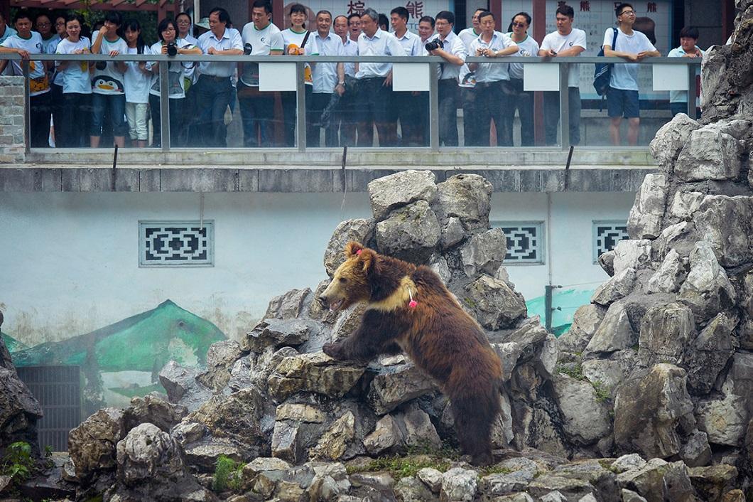 zhivotzaiyun 19 Лучшие фотографии животных со всего мира за неделю